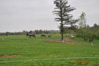Hestenepgrs20130010