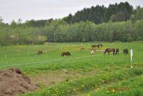 Hestenepgrs201300430