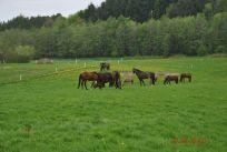 Hestenepgrs201301010